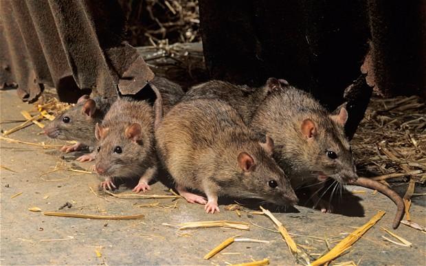 Nasjonale-rettningslinjer-til-rottegift